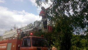 Kastamonu'da ağaçta mahsur kalan kediyi itfaiye kurtardı
