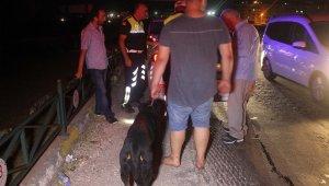 175 promilli sürücü köpeğini bırakmadı