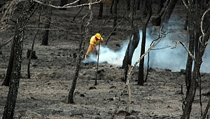 Ayvalık'ta yangın sonrası yürek yakan görüntü