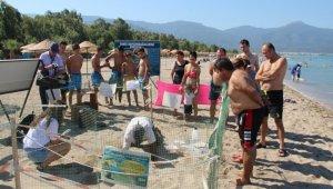 Kuşadası'nda yavru caretta carettaların denizle buluşması tamamlandı