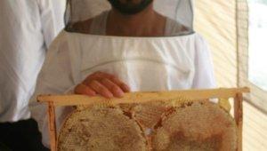 Muğla'da çam balı üreticisinin yüzü gülüyor