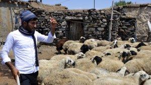 ÖSYM'nin hatası çoban Ahmet'in hayallerini yıktı