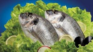 Her üç balıktan birini Bodrumlu balıkçılar ihraç edecek