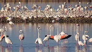 """Prof. Dr. Sıkı, """"Hedef 24 bin flamingo yuvası"""""""