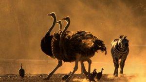 Doğal Yaşam Parkının en güzel fotoğrafı seçildi