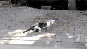 Kafasına cips poşeti takılı kalan kediyi vatandaş kurtardı