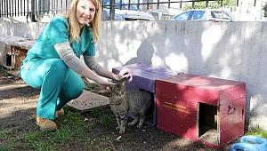 Bayraklı Belediyesi sahipsiz sokak hayvanlarına sahip çıkmaya devam ediyor