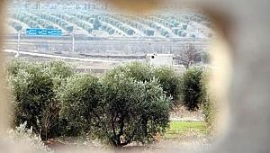 Terör örgütüne Afrin talimatı!
