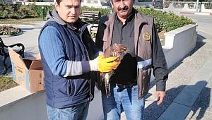 Yaralı Şahine Menderes Belediyesi Sahip Çıktı