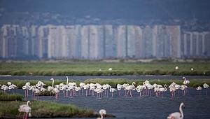 On Yıllık Mücadeleyi Flamingolar Kazandı