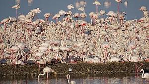 Kuşçu Hoca'ya Büyük Onur