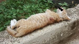 Tire'de dehşet: yavru kedi vahşice öldürüldü