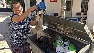 Milas'ta çok sayıda kedi ölü bulundu