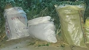 Mısır tarlasına uyuşturucu operasyonu: 4 gözaltı