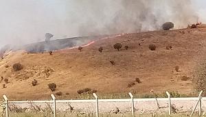 Aliağa'da otluk alanda yangın