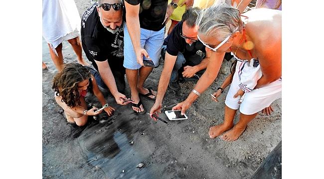 Çeşme'de ilk defa doğan Caretta yavruları denizle buluştu
