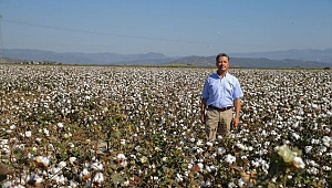 Pamuk Primi En Az Enflasyon Oranı Kadar Arttırılmalı!