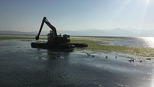 İzmir Körfezi'ndeki yeşil yosunları temizleme çalışmaları sürüyor