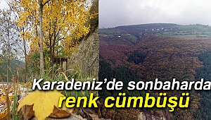 Karadeniz'de sonbaharda renk cümbüşü