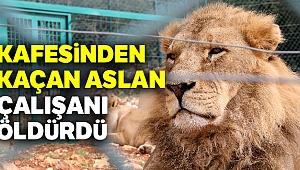 Kafesinden kaçan aslan çalışanı öldürdü