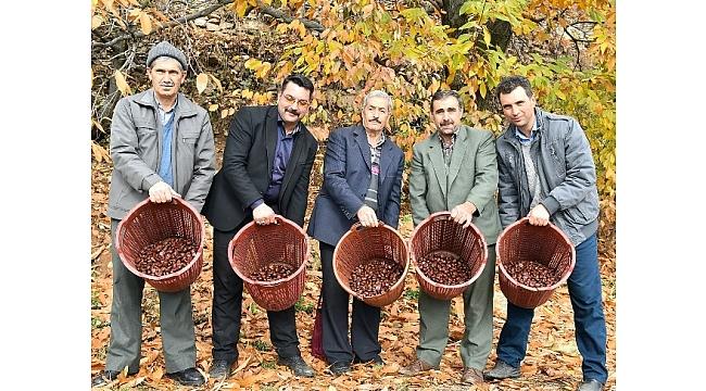 Kestane ağaçları için kurtuluş reçetesi