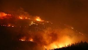 296 hektar alan yandı
