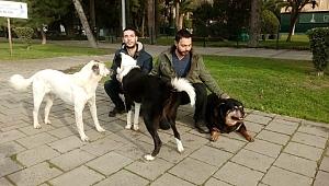 Köpek gezdirerek para kazanıyorlar