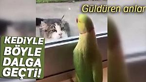 Camın arkasından kediyle böyle dalga geçti