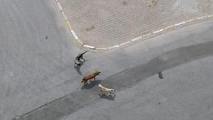 Sokak köpekleri için kaymakamdan yardım talebi