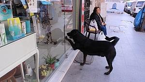 Akıllı köpek Kara'nin yaptıklarına bak