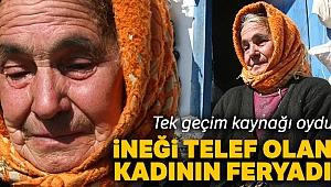Telef olan ineğinin başında feryat eden kadın 'acı ve çaresizliğin' yüzü oldu