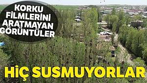 Sivas'ta korku filmlerini aratmayan görüntüler