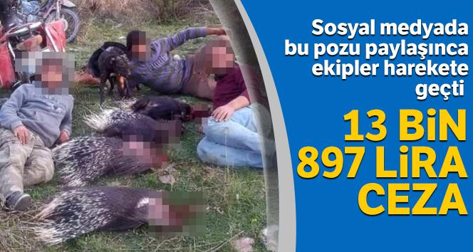 Avladıkları kirpilerle poz verdiler, 13 bin 897 lira ceza yediler