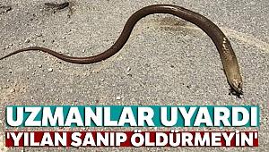 Uzmanlar uyardı: 'yılan sanıp öldürmeyin'