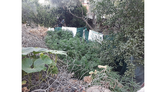Beydağ'da jandarmadan uyuşturucu ve silah baskını