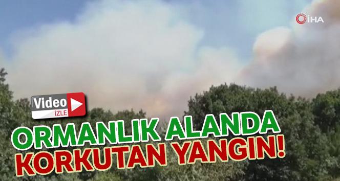 Pendik'te korkutan orman yangını söndürüldü