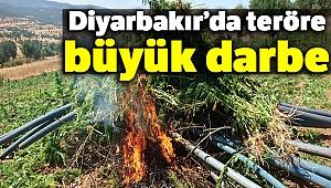 Diyarbakır'da teröre büyük darbe: 6 milyon kök keneviri ele geçirildi