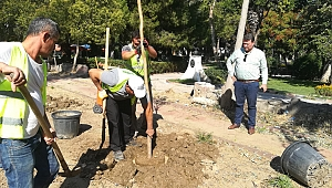 Menemen Belediyesi kurumuş ağaçların yerine yenilerini dikti
