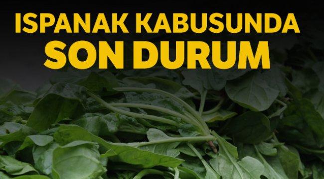 İl Tarım ve Orman Müdürü Karaca: 'Vatandaşlar gönül rahatlığıyla ıspanak yiyebilir'