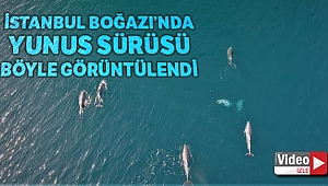 İstanbul Boğazında yunus sürüsü