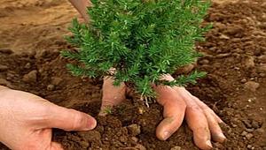 Tarım ve Orman Bakanlığı 'Geleceğe Nefes' olmaya devam ediyor.