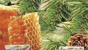 Arı ve bal çalıştayı yapılacak.