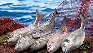 Rusya'ya balık ihracatında lider konumda