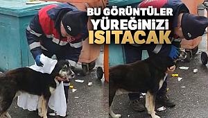 Temizlik işçisi yağmurdan ıslanan köpeği kuruladı, içleri ısıttı