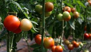 Muğla'da yaş sebze ve meyve üretimiyle ihracatı sürüyor