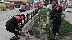 Polis, sokak hayvanlarına mama bıraktı