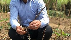 Beydağ'da salep hasadı yapıldı