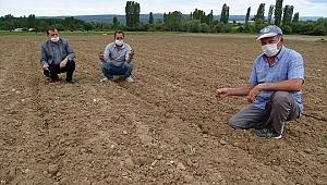 Hisarcık'ta zirai dondan tarım alanları zarar gördü