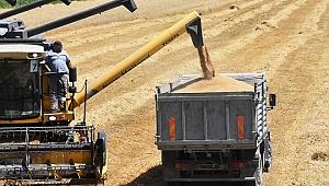 İlk buğday hasadı Dalaman TİGEM'de başladı