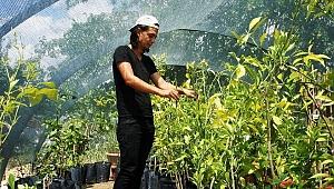 Sarıgöl'de tropikal meyve fidanları ilgi görüyor